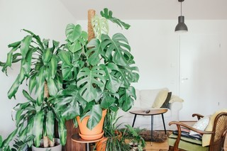 What Houseplant Matches Your Personality Type?