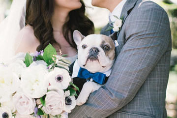 The Cutest Wedding Dogs on Instagram