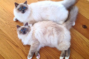 The Most Adorable Cats on Instagram
