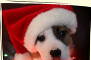 These Adorable Puppies and Kittens are Fully In the Christmas Spirit