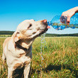 Watch for signs of heatstroke in your dog