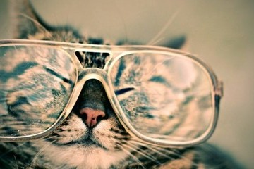 Ignore The Haters - This Is Why Cats Are Actually Awesome