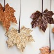 Collect Colorful Fall Foliage