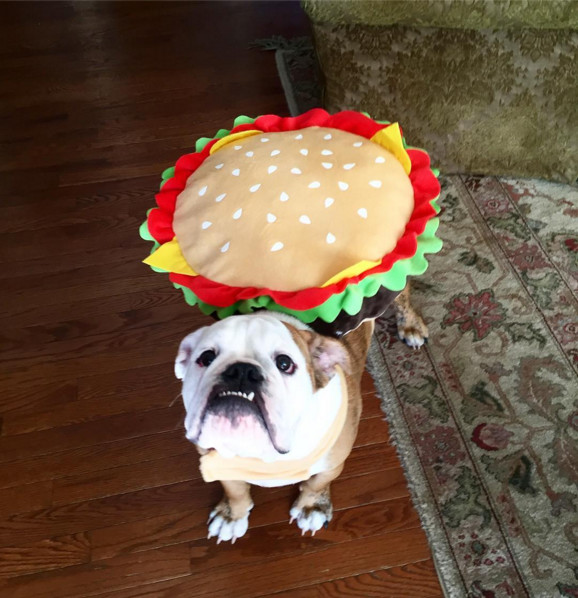 Hamburger The Best Dog Costumes On Instagram Livingly