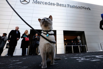 Leash-Trained Cat Went to New York Fashion Week, Upstaged Models