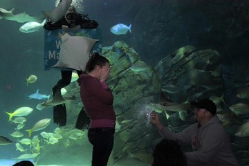 This is What Happens When a Stingray Photobombs Your Wedding Proposal