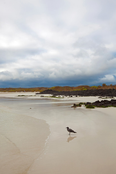 Tortuga Bay, Galápagos Islands