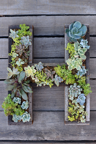 Monogram Your Succulents