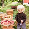 Attend a Harvest Festival