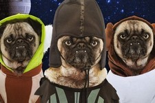 15 Animals Who Are Celebrating 'Star Wars' Day Harder Than You