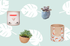 15 Quirky Pots Your Plant Friends Are Begging For